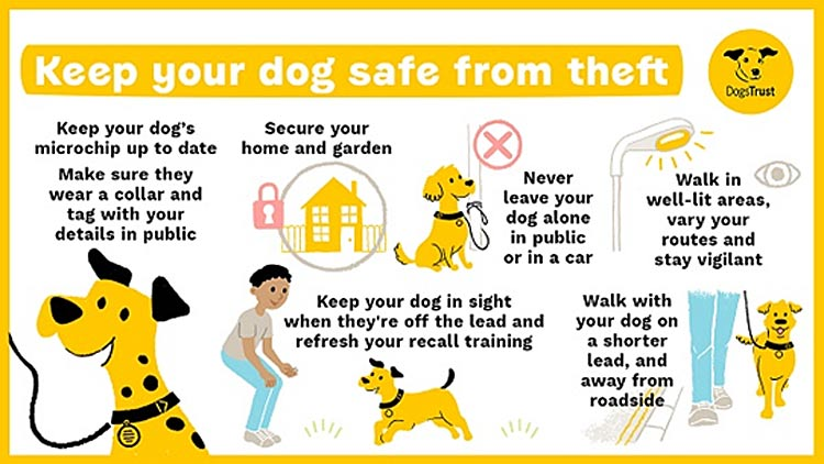 Protecting your Dog from Theft